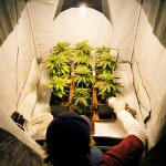 Easiest Way To Grow Marijuana