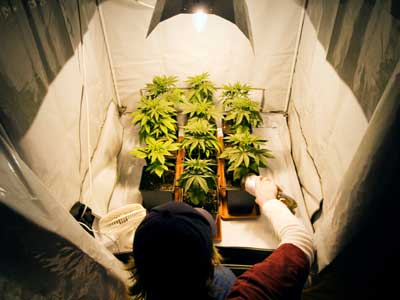 how to get license to grow medical weed in canada