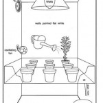 Easy Growing Marijuana