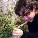 Marijuana Cultivation Tips