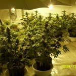 Marijuana Growing Trouble Shooting